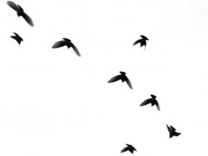 zburam-impreuna